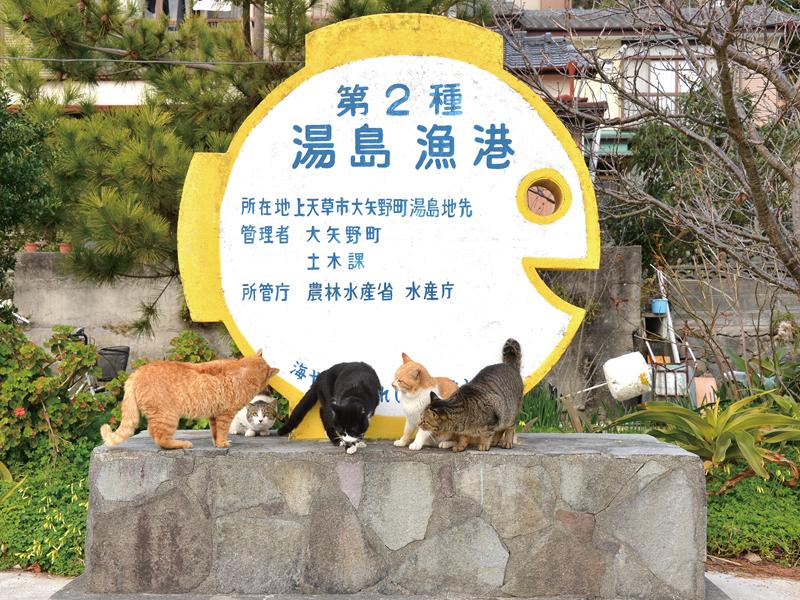 『猫島』湯島ガイドツアーイメージ